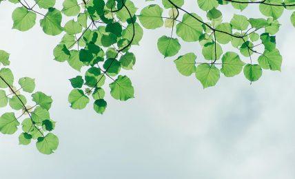 Leaves under sky